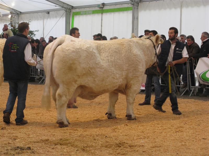savinoise-au-super-moulins-12-2011-1.jpg